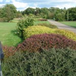 Narodowa kolekcja rodzaju Cotoneaster