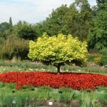 Ogród botaniczny Uniwersytetu Jagielońskiego