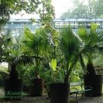 Ogród botaniczny Uniwersytetu Jagielońskiego (2)