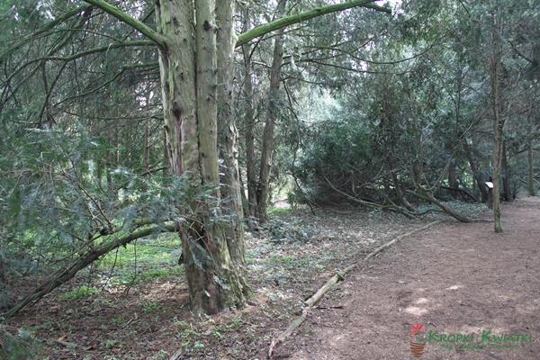 cisowe komnaty arboretum kórnik