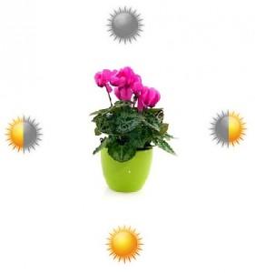 Wystawa wzależności odkierunków świata - blog ogrodniczy