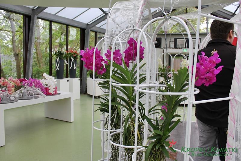 Keukenhof - festiwal tulipanów