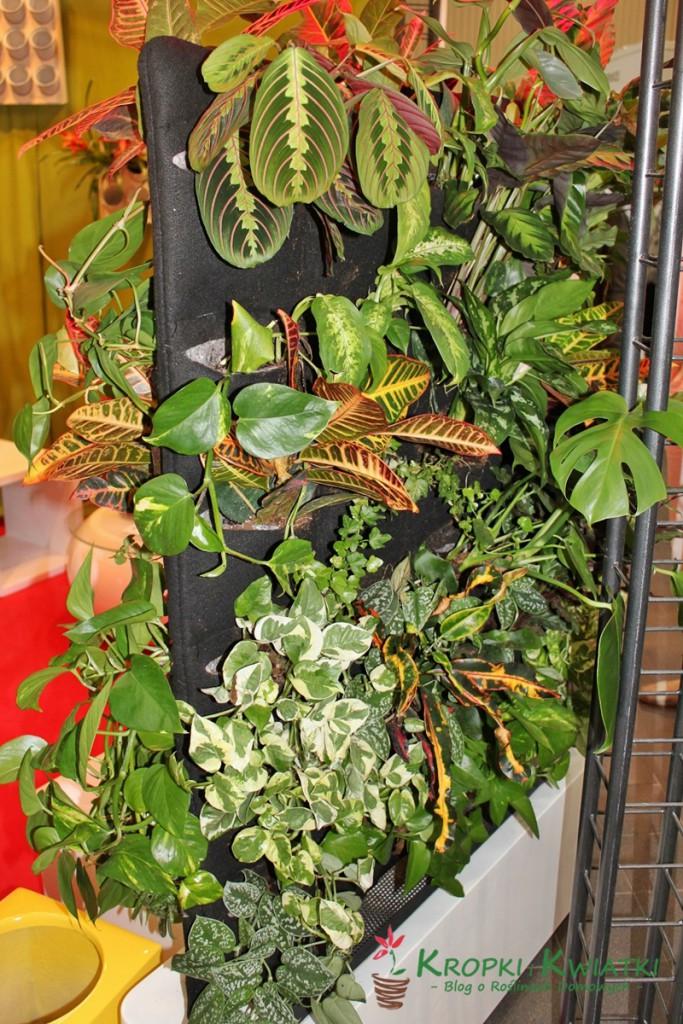 zieleń tożycie wystawa
