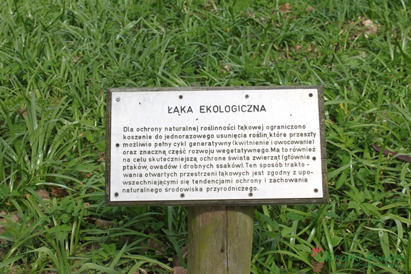 łąka ekologiczna kórnik arboretum