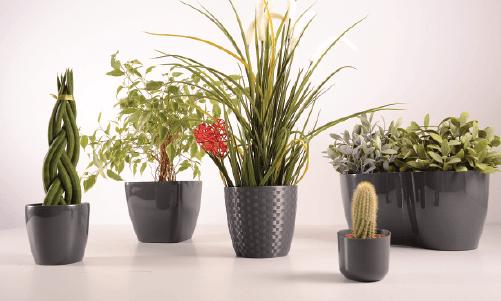 Kupowanie roślin doniczkowych